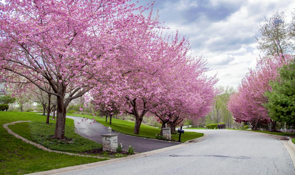 Blissful Driveway Cherry